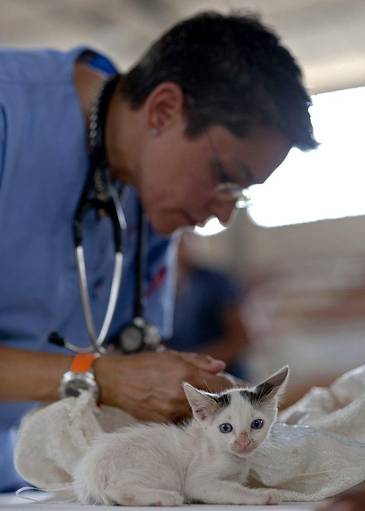 Få den rette hjælp til dit kæledyr hos din dyrlæge i København