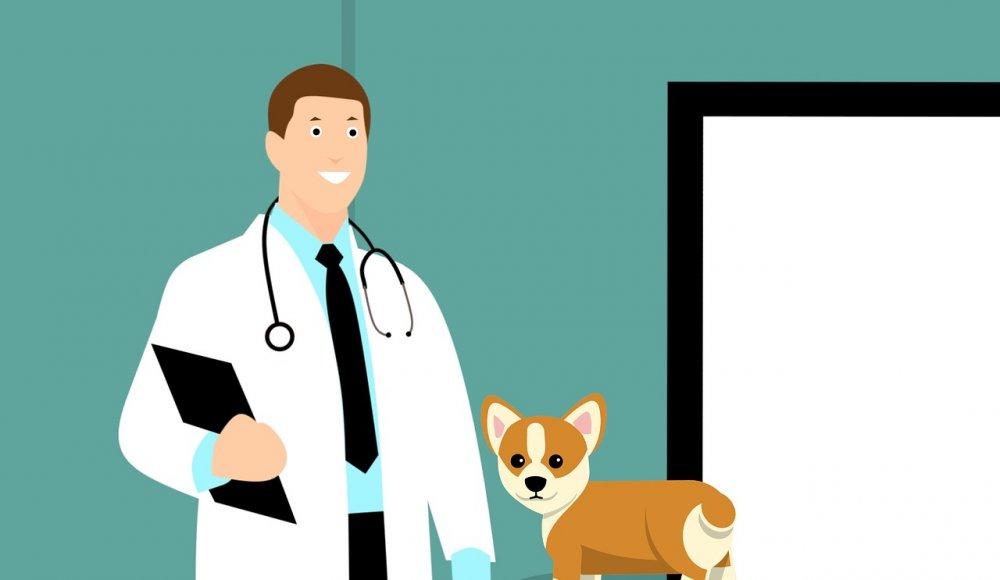 Find din lokale dyrlæge i Varde